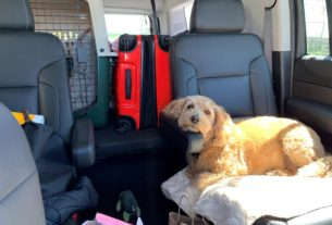 stranded-pets,-desperate-owners-split-up-by-coronavirus-travel-curbs