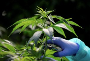 israel-approves-medical-cannabis-exports