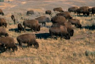 yellowstone-and-grand-canyon-partially-reopening