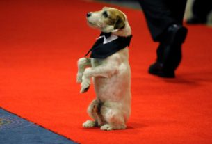 terrier-uggie-from-'the-artist'-crowned-best-cannes-movie-mutt