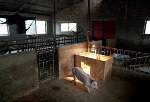 south-africa-conducts-tests-to-curb-african-swine-fever-outbreak