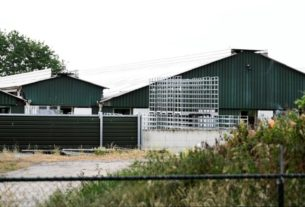 dutch-to-cull-mink-at-farms-hit-by-coronavirus-outbreak