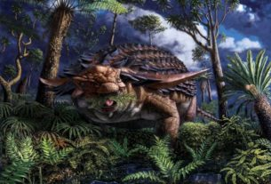 fossilized-stomach-contents-show-armored-dinosaur's-leafy-last-meal