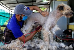 thailand's-roving-dog-groomer-back-in-business