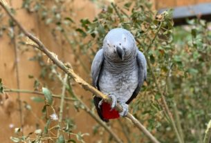 parrots-in-wildlife-park-moved-after-swearing-at-visitors