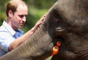 the-uk's-prince-william-launches-nobel-like-prize-for-the-environment