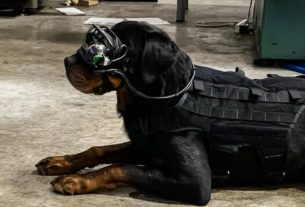 us-military-dogs-are-trialing-augmented-reality-goggles