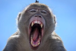 ancient-thai-city-grapples-with-surging-monkey-population