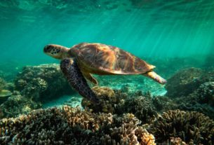 the-great-barrier-reef-has-lost-half-its-corals-within-3-decades