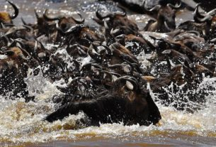 a-massive-animal-migration-is-still-happening-in-the-maasai-mara.-but-the-pandemic-means-few-can-see-it