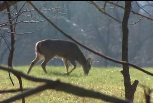 pa-hunters-can-donate-deer-for-food-insecurity