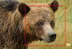 face-recognition-isn't-just-for-humans-—-it's-learning-to-identify-bears-and-cows,-too