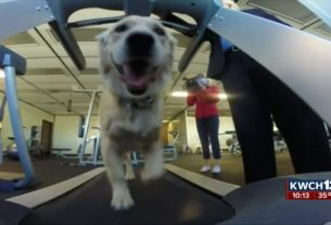 k-9's-treadmill-workout-goes-viral