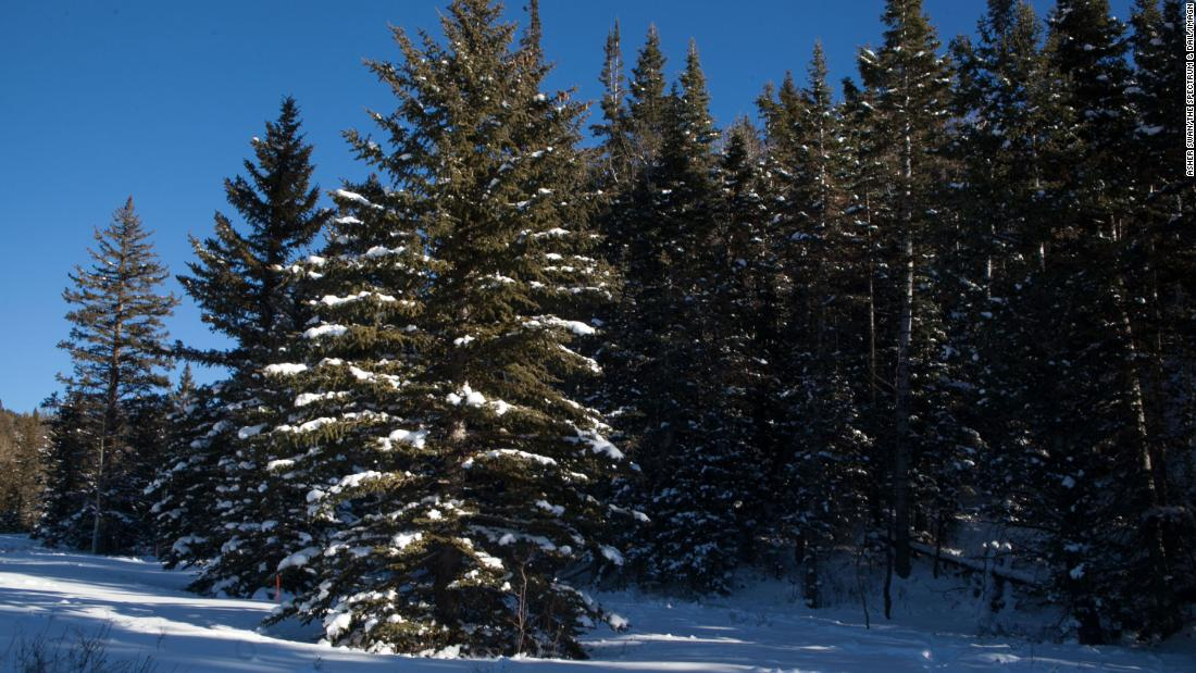 national-forests-will-let-you-cut-your-own-christmas-tree