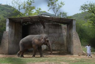 singer-cher-has-helped-rescue-the-'world's-loneliest-elephant'-from-decades-of-captivity