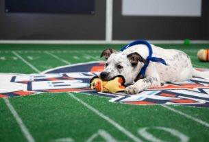 animal-planet's-pup-ular-puppy-bowl-to-go-on-as-planned