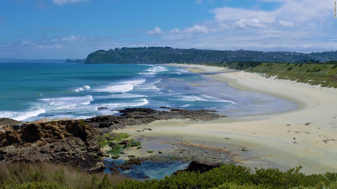 new-zealand-closes-road-for-a-month-to-let-sea-lions-nest-safely