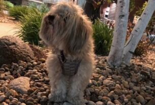 police:-stolen-therapy-dog-reunited-with-owner