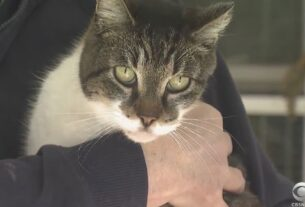 cat-lost-for-weeks-finds-his-way-back-home