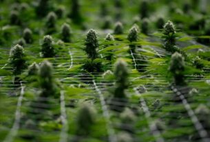 organigram-shares-gain-as-british-american-tobacco-buys-19.9%-stake,-to-cooperate-on-cbd-products