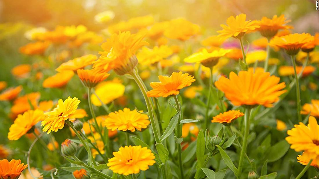 it's-gardening-time:-here-are-11-flowers-and-vegetables-to-plant-this-spring