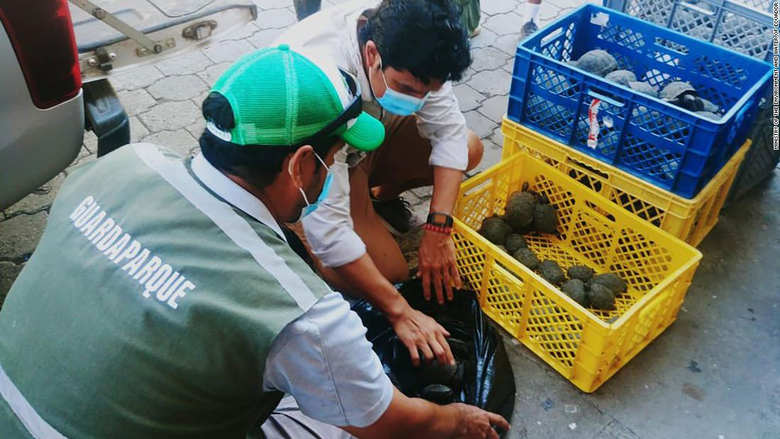galapagos-airport-officials-find-185-baby-tortoises-hidden-in-a-suitcase
