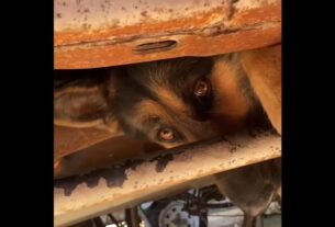 firefighters-free-frightened-dog-from-under-truck