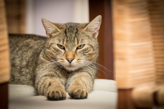 study-confirms-cases-of-human-to-cat-covid-19-transmission