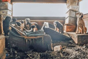 50+-dogs-removed-from-feces-covered-home