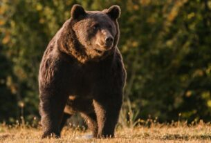 a-liechtenstein-prince-is-accused-of-killing-one-of-europe's-biggest-bears