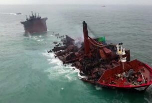 'the-situation-is-hopeless':-pollution-from-sunken-ship-devastates-marine-life