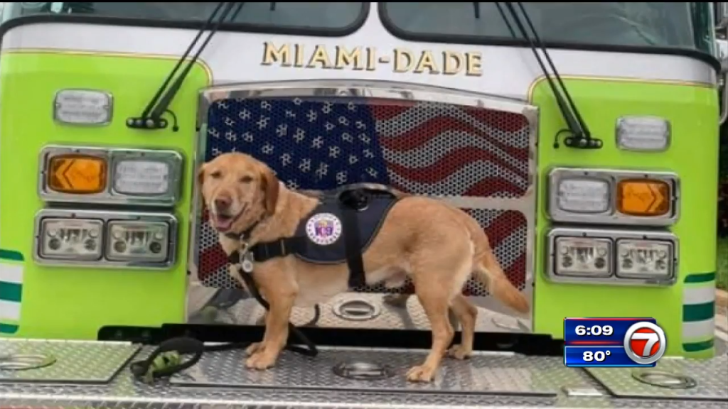 plane-donated-to-fly-hurt-comfort-dog-home