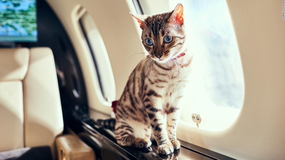 why-more-travelers-are-flying-their-pets-by-private-jet