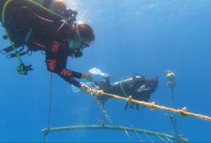 regenerative-travel-is-protecting-colombia's-coral-reefs
